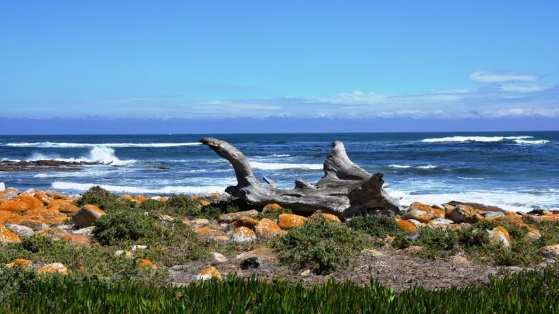 5x de leukste roadtrips in Zuid-Afrika, tuinroute - Map of Joy