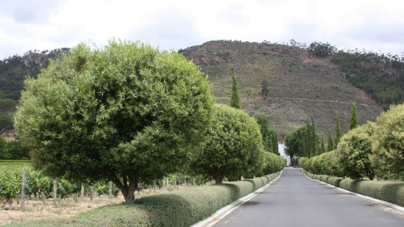 5x de leukste roadtrips in Zuid-Afrika, wijnroute - Map of Joy