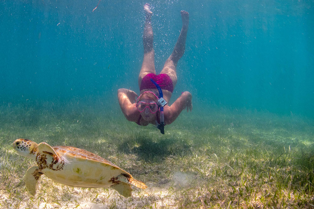 Swim with turtles in Akumal