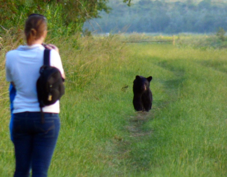 Meg in a stare off with a Black bear in North Carolina.