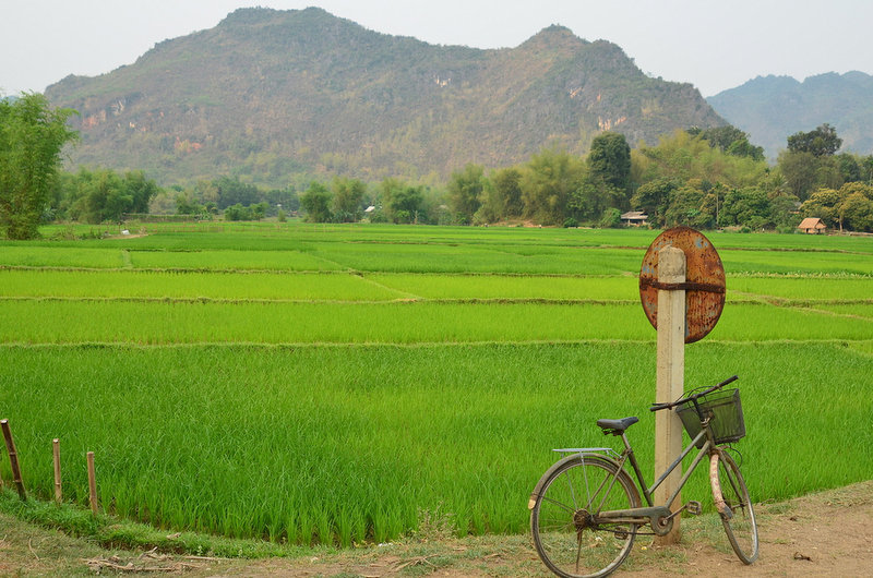 Cycling past Rice Paddy's in Vietnam. Photo: Global Water Forum