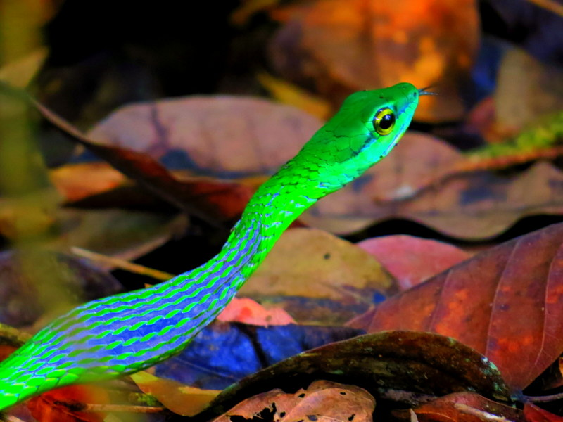 Spotted: Snakes of vivid green.