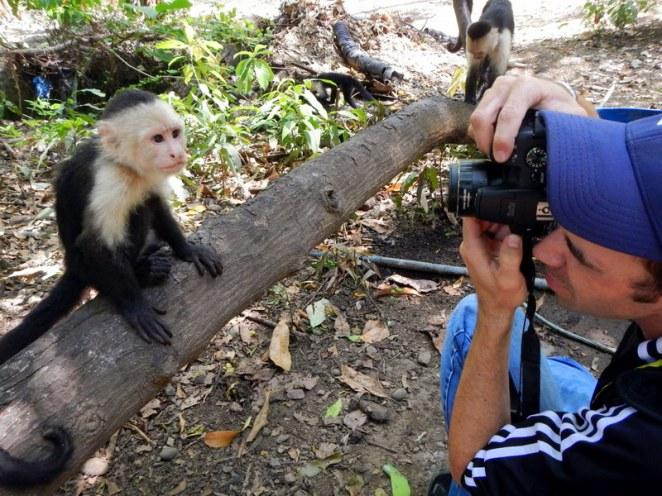 Capturing squirrel monkeys in Costa Rica.
