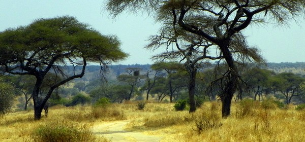 The Bus Trip from Hell: Overland from Kenya to Tanzania
