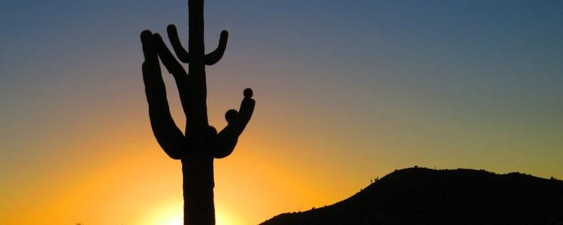 Road-running through Arizona
