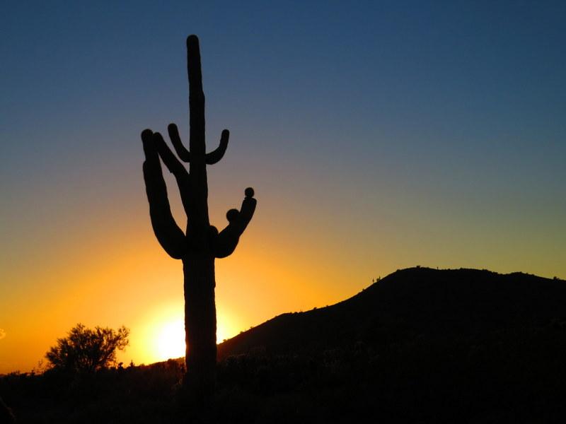 Arizona Desert Sunset