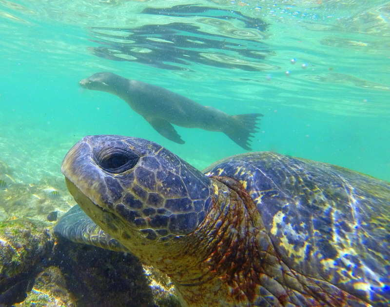 Snapped it! A tortoise and a sea turtle in the one shot!