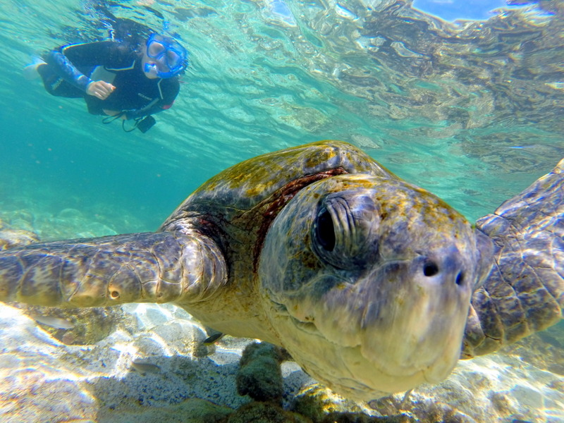 Snorkeling in the Galapagos.