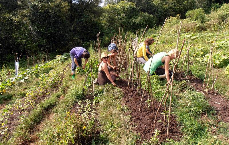 organic-gardening-volunteers