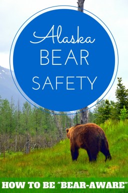 How to behave around wild Alaskan bears.