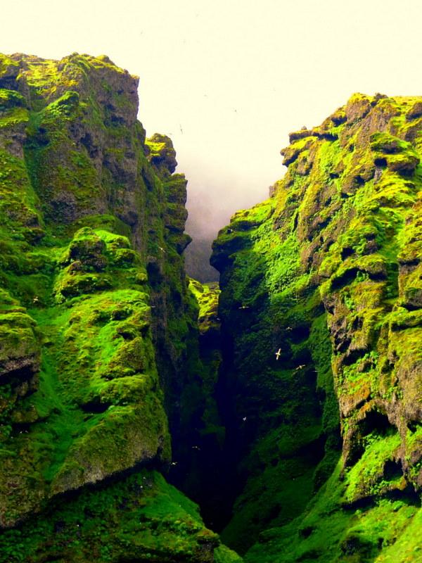 Iceland bird cliffs