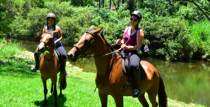 There are many World Heritage Listed rainforest trails throughout the hinterland for bushwalking, though it's a little more unique to explore by horse.