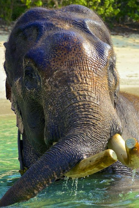 On Andamans Island you can swim with the elephants, get lost in the ancient jungles, explore the underwater world, and swim in the cleanest and the most transparent water in the world.