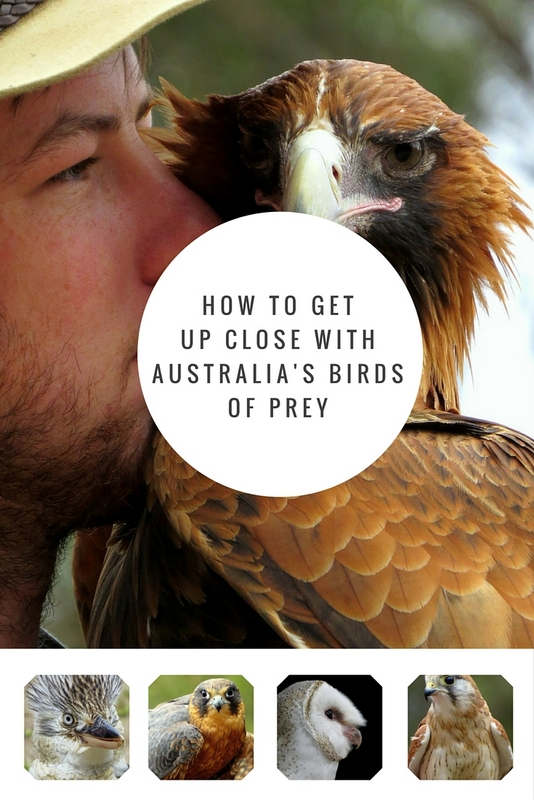 More than 260 bird species call Kangaroo Island home, and it is here that you have the unique opportunity to get up close and personal with Australia's most impressive birds of prey.