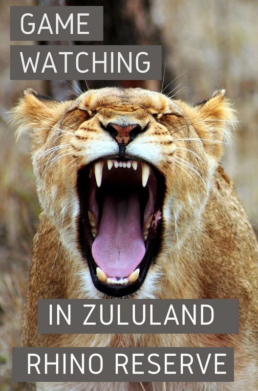 Of all the private game reserves in South Africa, Zululand Rhino Reserve should be on your list.