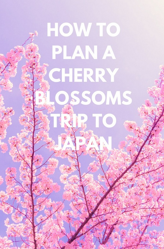 Famous throughout the world, Japan's cherry blossoms put on a spectacular show every spring with visitors coming from far and wide to view the incredible sight.