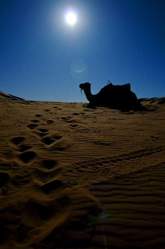 Camel trek through the Sahara Desert Morocco