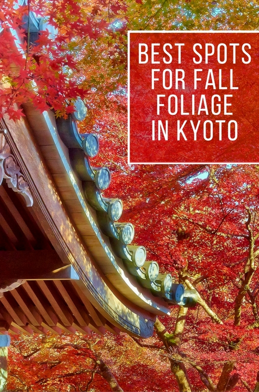 Forget the cherry blossoms, Autumn is the most beautiful time of year to visit Japan! And Kyoto has some of the most stunning fall foliage in the country.