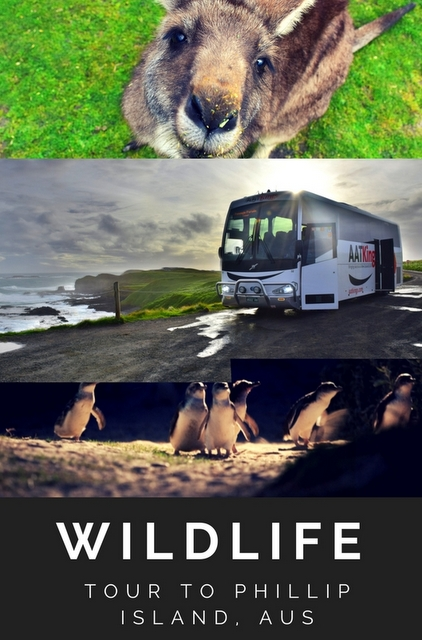 For those who want the chance to experience Australian wildlife, day trips are the best way to see them up close!