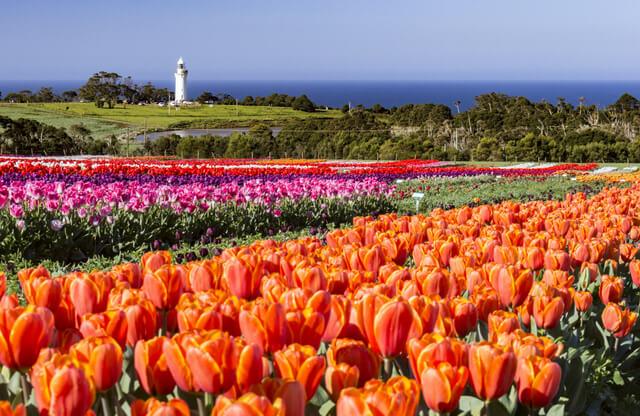 Wynyard Tulip Festival, Tasmania