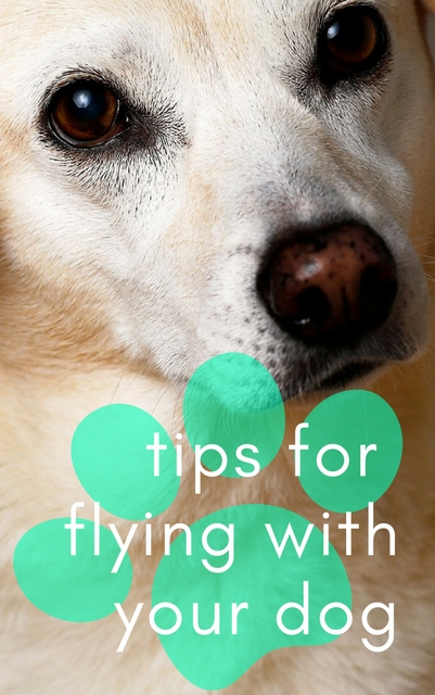Tips for flying with your dog