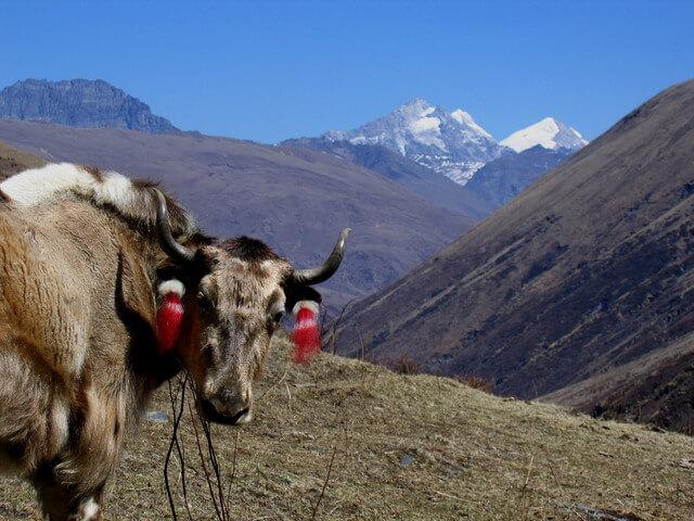 Jhomolhari Trek 186 Bhutan