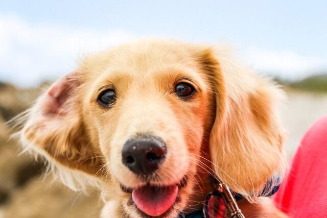 Dog pet RF