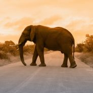 5 Things They Don't Tell You About Your First African Safari