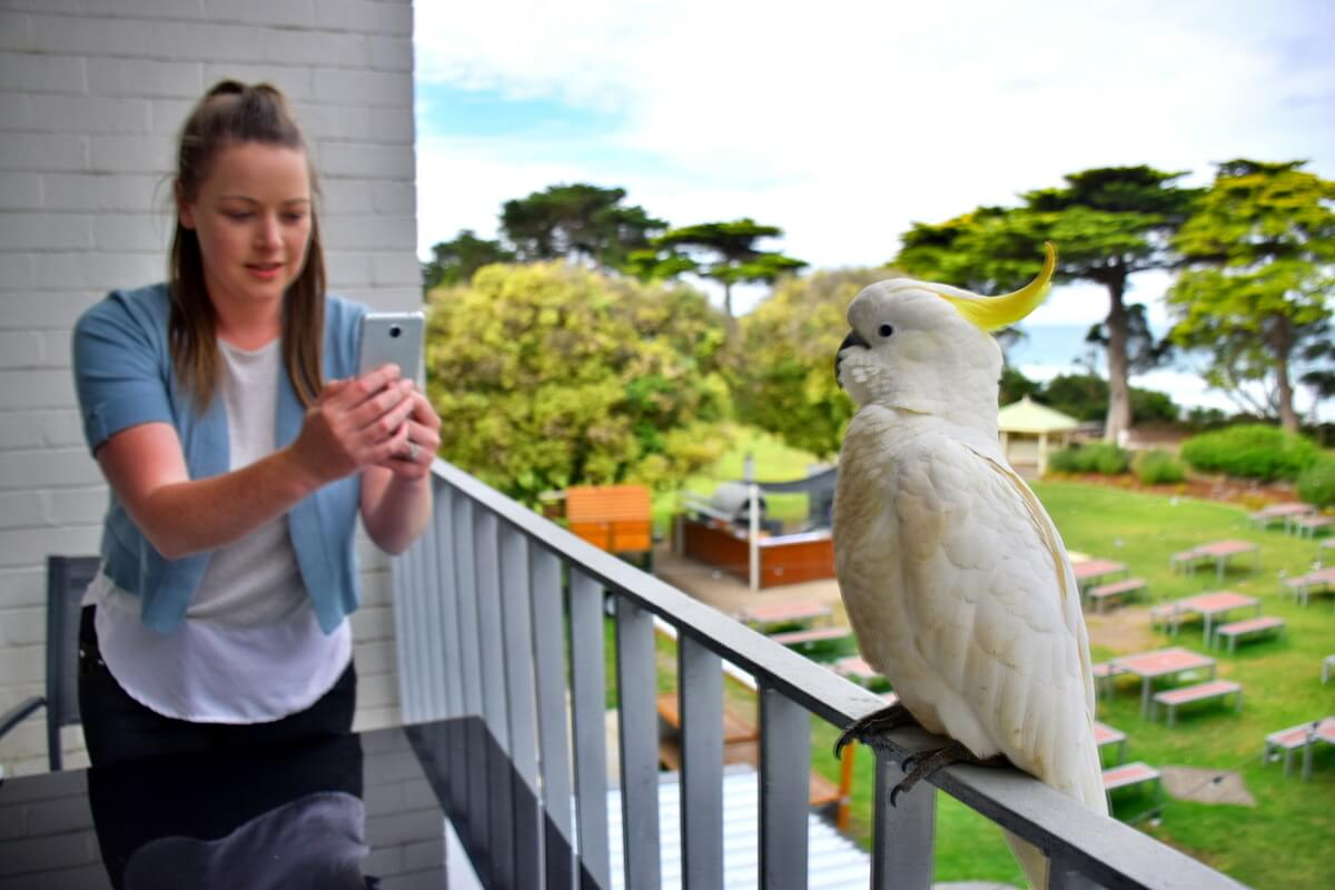 Mantra Lorne Hotel Review Great Ocean Road