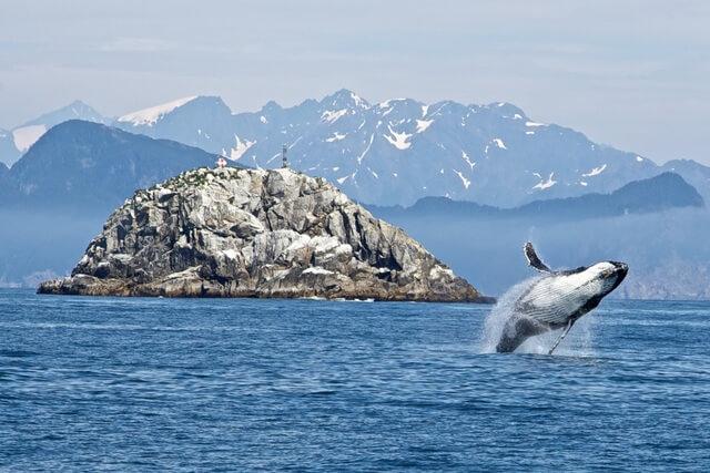 Alaska Whale RF
