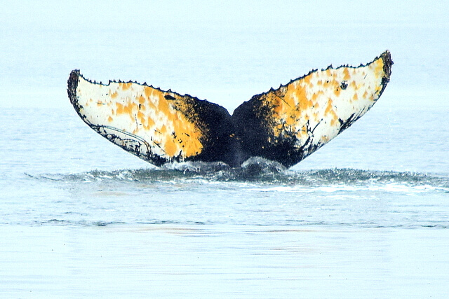 Whale Tail by Mike Jerrard