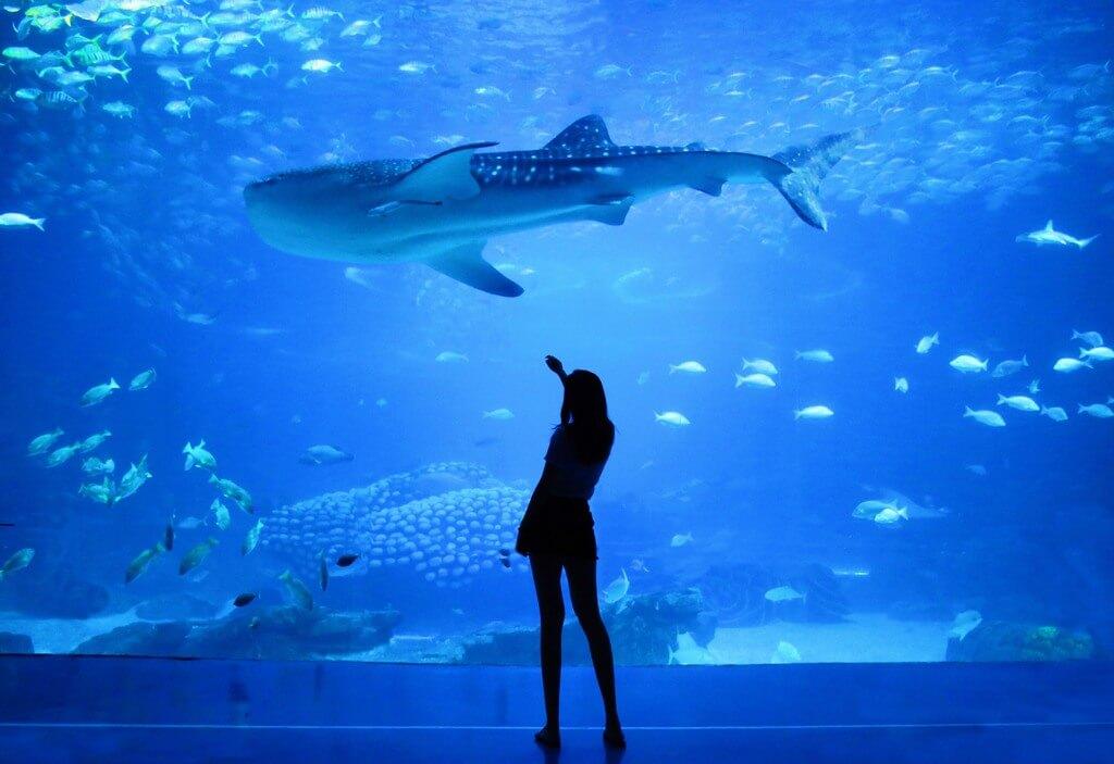 Aquarium RF