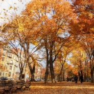 Ideas for Combining History and Nature in Boston