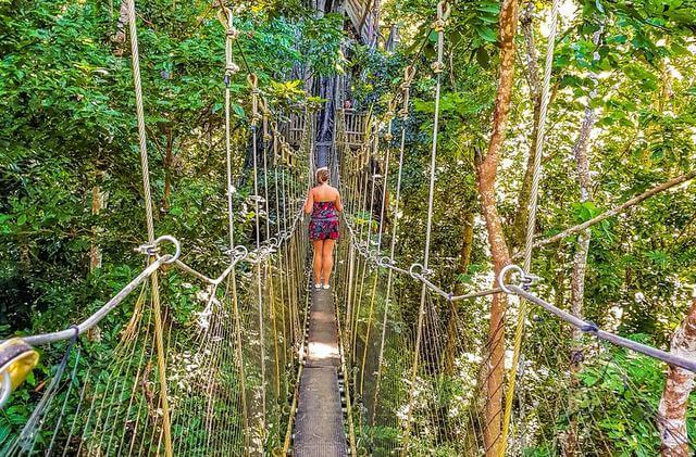 Canopy Walk Samoa