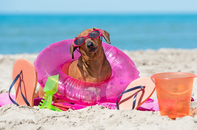 The Best Places in California to Visit with Dogs RF