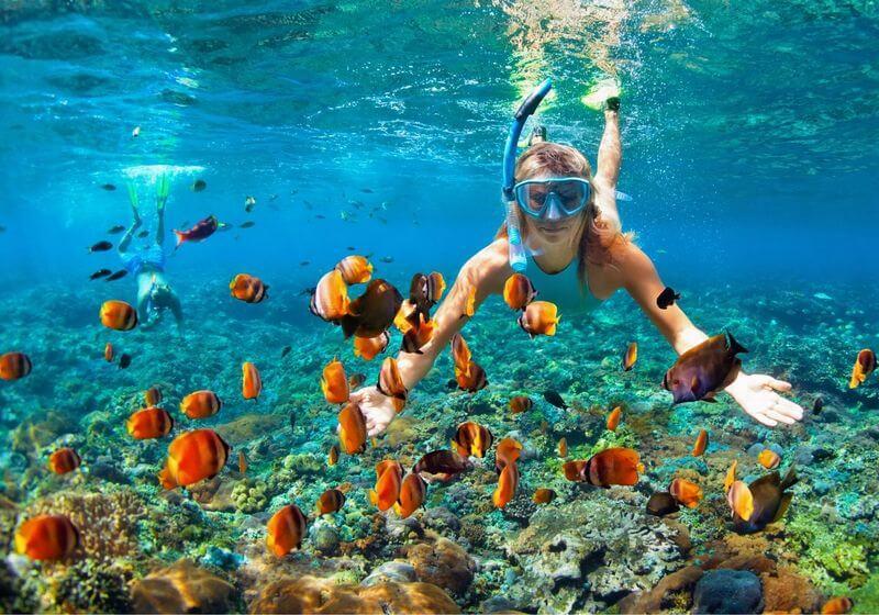 Snorkel coral reef swim RF