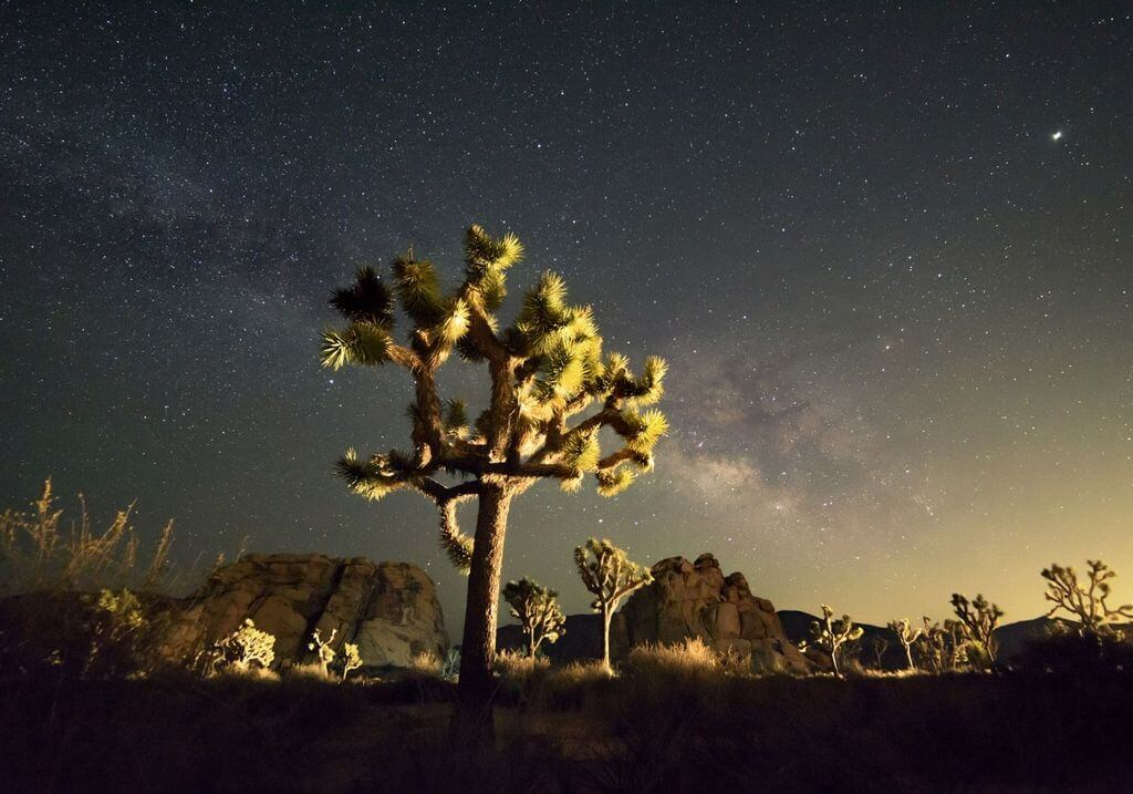 Joshua Tree by night