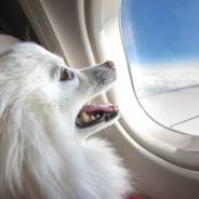A Guide to Safe Travel With Your Pets