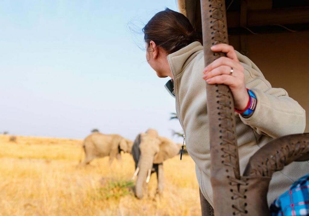 African safari elephants RF