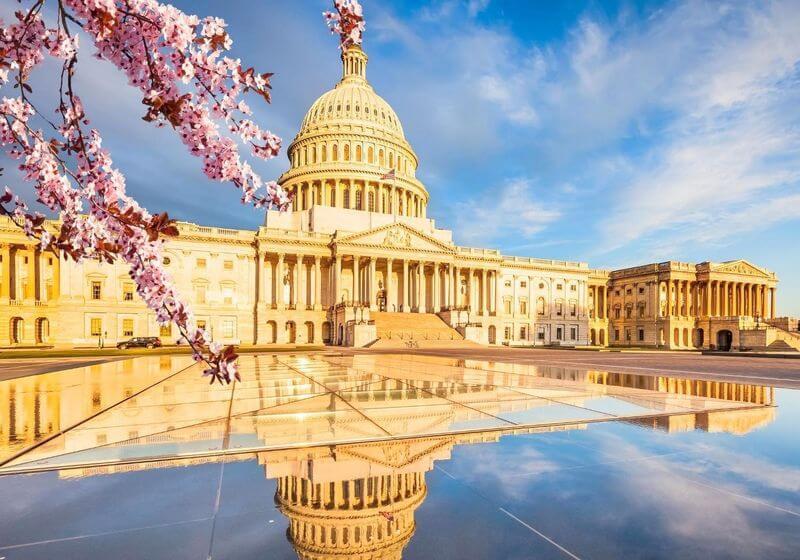 Washington DC Capitol Building RF Cherry Blossom