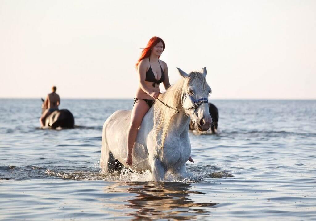 Swim with horses RF