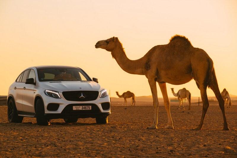 Dubai car camels desert RF