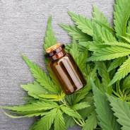 How to Travel Easily With CBD