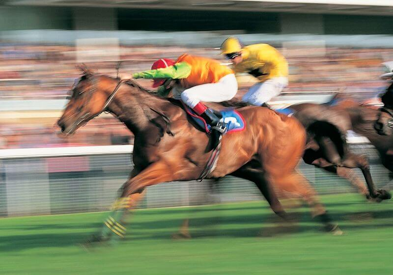 Horse Race RF