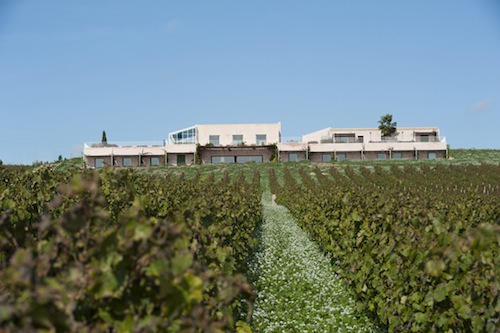 Planeta Estate vineyards