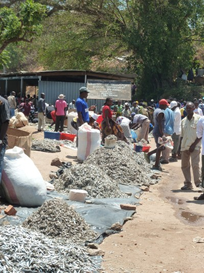 The Ilala reached NKhata Bay. On this day the market is larger since there are more items to sell. Fish is always the main item available