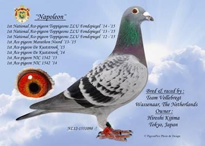 Napoleon van Team Vollebregt verkocht naar Japan