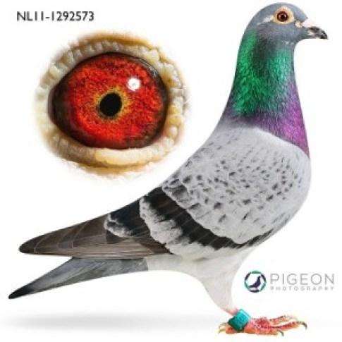 NL11-1292573 Jack verkleind