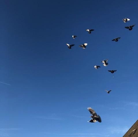 Dagboek van een duivenmelkster (3)