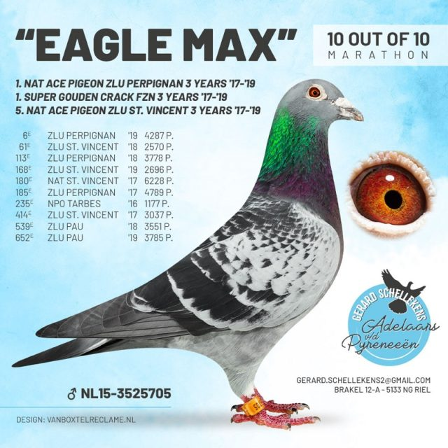 Topper van 2019 … 'Eagle Max' van Gerard Schellekens